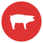 Pig equipment icon